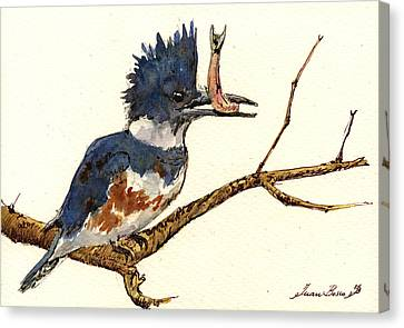 Belted Kingfisher Bird Canvas Print by Juan  Bosco