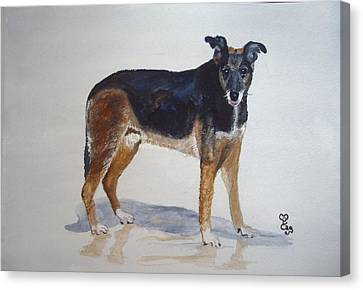 Ben Canvas Print by Carole Robins