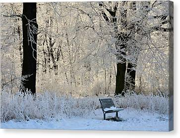 Bench In The Park Canvas Print by Gynt