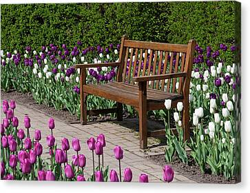 Bench In Tulips (tulipa 'negrita' Canvas Print by Richard and Susan Day