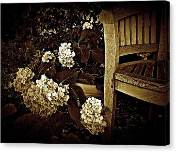Bench With Hydrangeas Canvas Print