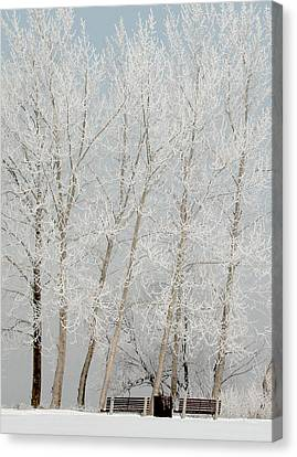 Benches And Hoar Frost Trees Canvas Print by Rob Huntley