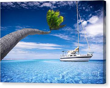 Canvas Print featuring the photograph Bending Palm Tree by Boon Mee