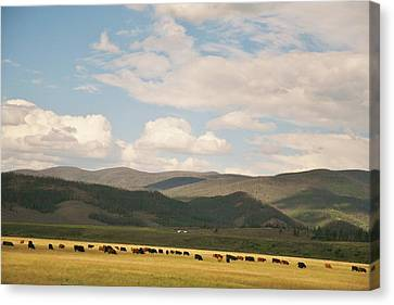Canvas Print featuring the photograph Beneath The Open Sky I Roam by Shirley Heier