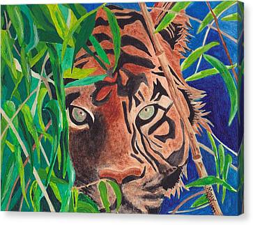 Bengal Eyes Canvas Print by Molly Williams