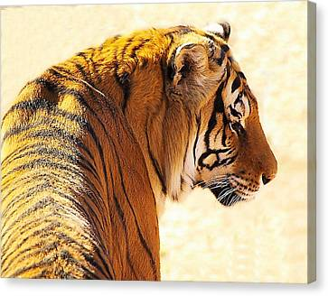 Bengal Tiger In Thought Canvas Print by JAXINE Cummins