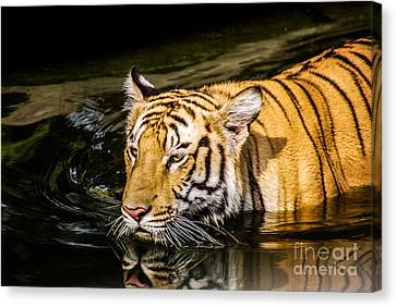 Bengal Tiger - Reflection Canvas Print