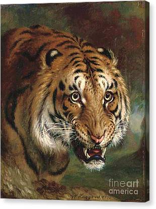 Bengal Tiger Canvas Print by Pg Reproductions