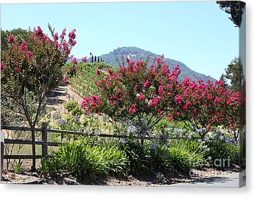Benziger Winery In The Sonoma California Wine Country 5d24493 Canvas Print by Wingsdomain Art and Photography