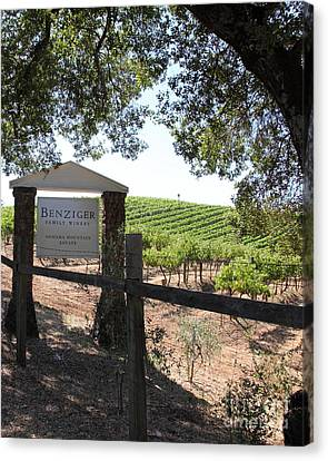 Benziger Winery In The Sonoma California Wine Country 5d24592 Vertical Canvas Print by Wingsdomain Art and Photography