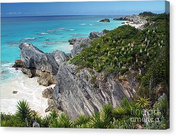 Bermuda Beach Canvas Print by Steven Spak