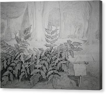 Canvas Print featuring the drawing Bernheim Forest Plant by Stacy C Bottoms