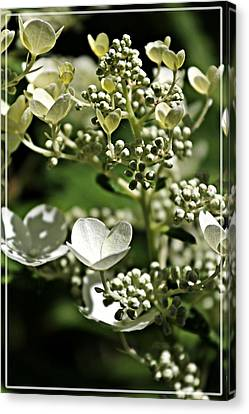 Berries And Blooms In Monochromatic Green Canvas Print by Jp Grace