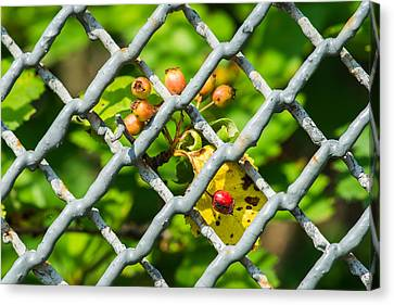 Berries And The City - Featured 3 Canvas Print by Alexander Senin