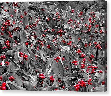 Berries Canvas Print by Dan Sproul