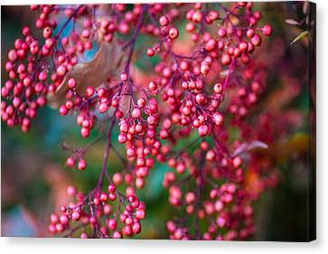 Berries Canvas Print by Mike Lee