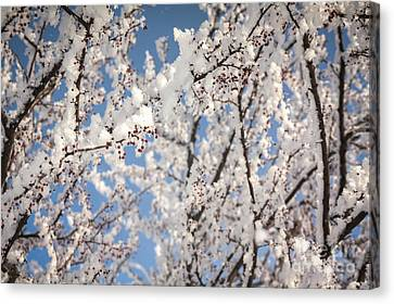 Canvas Print featuring the photograph Berries With Frost by Kari Yearous