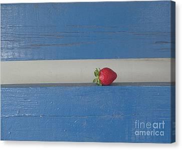 Berry Blues Canvas Print by Christina Verdgeline