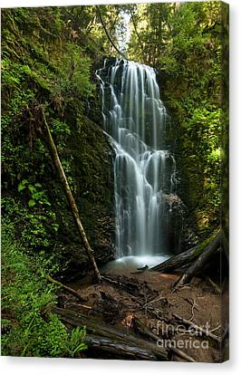 Berry Creek Falls In Big Basin Canvas Print by Matt Tilghman