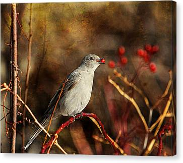 Berry Delighted Canvas Print by Donna Kennedy