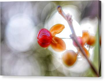 Mills Canvas Print - Berry by Marianna Mills