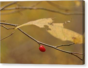 Berry Canvas Print by Mark Russell