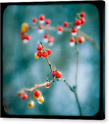 Berry Nice - Red Berries - Winter Frost Icy Red Berries - Gary Heller Canvas Print by Gary Heller