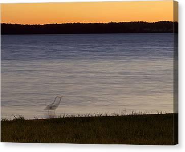Beside Myself - Great Blue Heron At Sunset Canvas Print by Jane Eleanor Nicholas