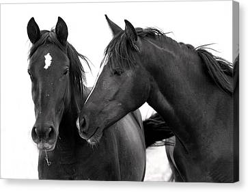 Best Buds Wild Mustang Canvas Print by Rich Franco