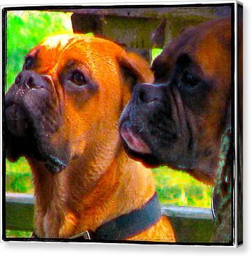 Best Friends Dog Photograph Canvas Print by Laura Carter