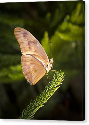 Best Side Of The Butterfly Canvas Print by Jean Noren