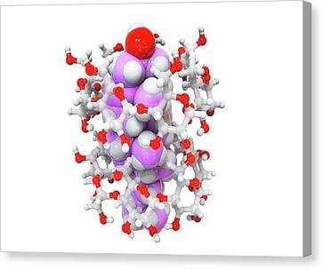 Beta-cyclodextrin And Cholesterol Complex Canvas Print by Ramon Andrade 3dciencia