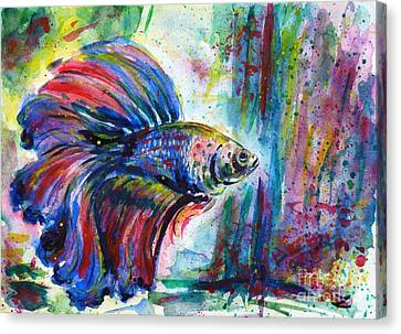 Betta Canvas Print by Zaira Dzhaubaeva