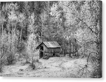 Better Days In Black And White Canvas Print by James BO  Insogna