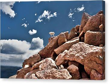 Between A Rock And A Hard Place Canvas Print by Tejas Prints