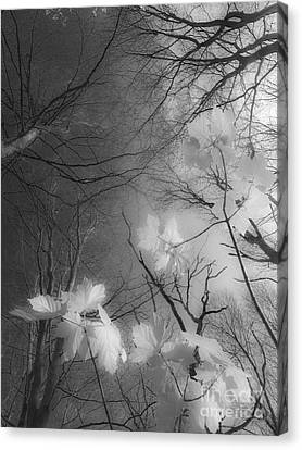 Between Black And White-02 Canvas Print