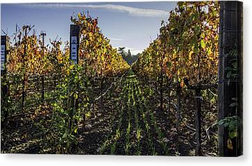 Vine Grapes Canvas Print - Between The Rows by Bill Gallagher