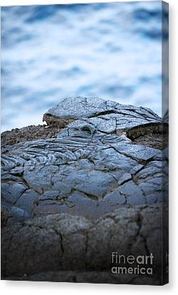 Canvas Print featuring the photograph Between You And Me by Ellen Cotton