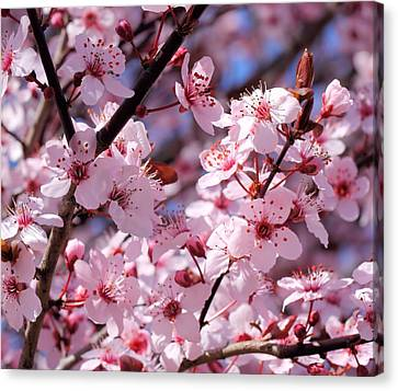 Bevy Of Blossoms Canvas Print by Katherine White