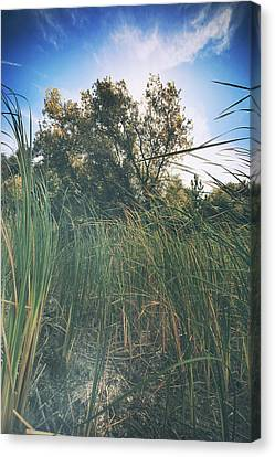Beyond The Grass Canvas Print by Laurie Search