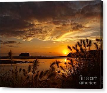 Canvas Print featuring the photograph Beyond The Reeds by Trena Mara