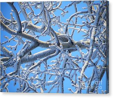 Bifurcations In White And Blue Canvas Print by Brian Boyle