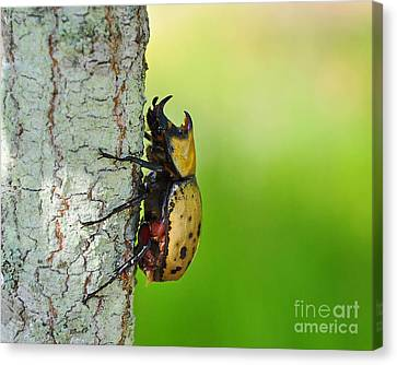 Big Bad Beetle Canvas Print