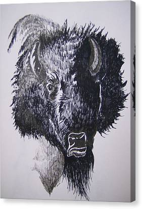 Big Bad Buffalo Canvas Print