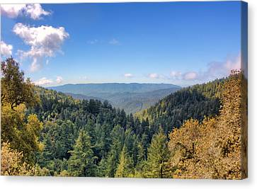 Canvas Print featuring the photograph Big Basin Redwoods by Brent Durken