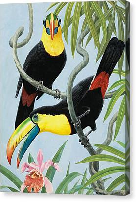 Hornbill Canvas Print - Big-beaked Birds by RB Davis