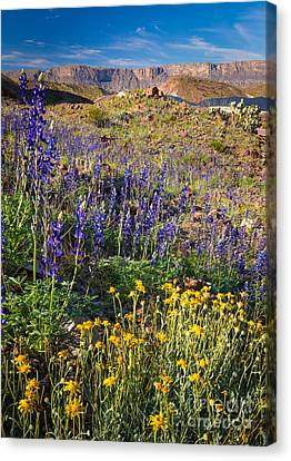 Big Bend Flowers Canvas Print by Inge Johnsson