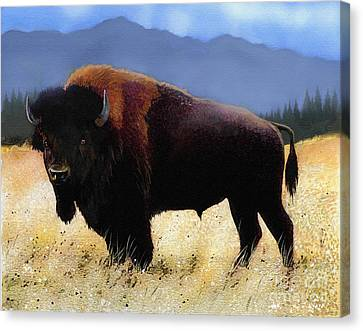 Bison Canvas Print - Big Bison by Robert Foster