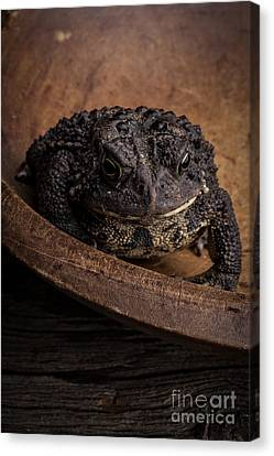 Wooden Bowls Canvas Print - Big Black Toad by Edward Fielding