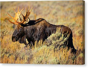 Canvas Print featuring the photograph Big Boy by Greg Norrell